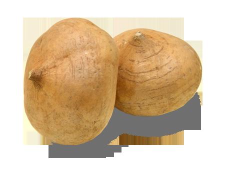 Yam Bean (Jicama)