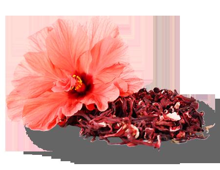 Jamaica Hibiscus